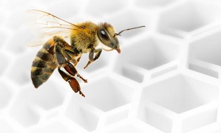 Biene vor einer Wabe